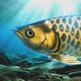 从杂鱼开始培育龙鱼